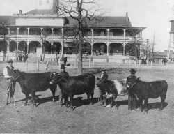 In 1896 the first Stock Show takes place in March on the banks of Marine Creek in North Fort Worth.