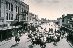Longhorn cattle drive in the Stockyards, before there were tourist