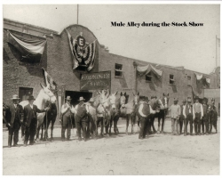 Mule Alley in the Fort Worth Stockyards during the Stock Show, circa 1915.